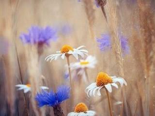 цветы вдохновение 1