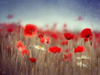 цветы вдохновение 3