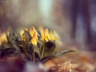 цветы вдохновение 4