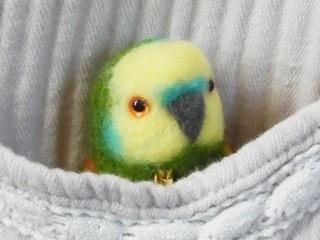 брошь попугай 1
