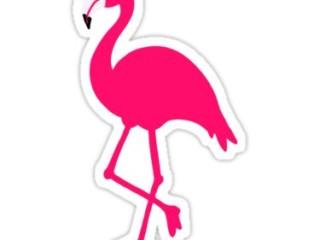 шаблон фламинго 7